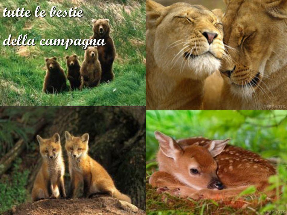 tutte le bestie della campagna