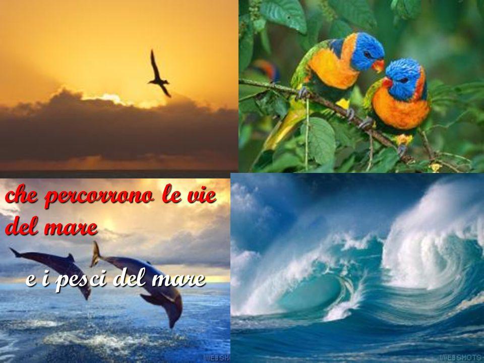 gli uccelli del cielo e i pesci del mare che percorrono le vie del mare