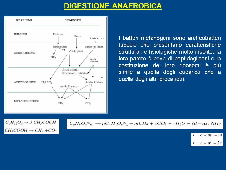 DIGESTIONE ANAEROBICA I batteri metanogeni sono archeobatteri (specie che presentano caratteristiche strutturali e fisiologiche molto insolite: la loro parete è priva di peptidoglicani e la costituzione dei loro ribosomi è più simile a quella degli eucarioti che a quella degli altri procarioti).