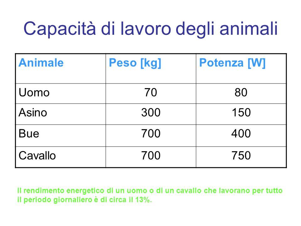 Capacità di lavoro degli animali AnimalePeso [kg]Potenza [W] Uomo7080 Asino300150 Bue700400 Cavallo700750 Il rendimento energetico di un uomo o di un cavallo che lavorano per tutto il periodo giornaliero è di circa il 13%.