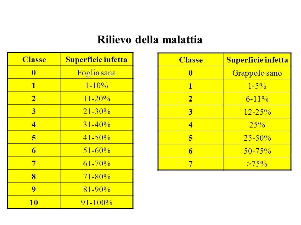 Rilievo della malattia ClasseSuperficie infetta 0Foglia sana 11-10% 211-20% 321-30% 431-40% 541-50% 651-60% 761-70% 871-80% 981-90% 1091-100% ClasseSu