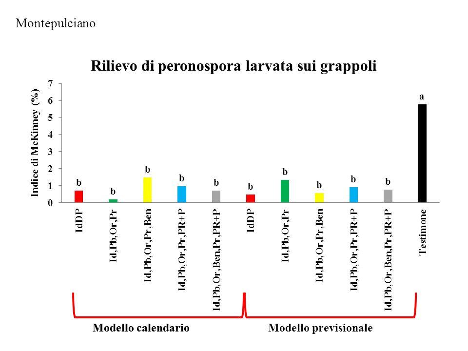 Montepulciano Rilievo di peronospora larvata sui grappoli