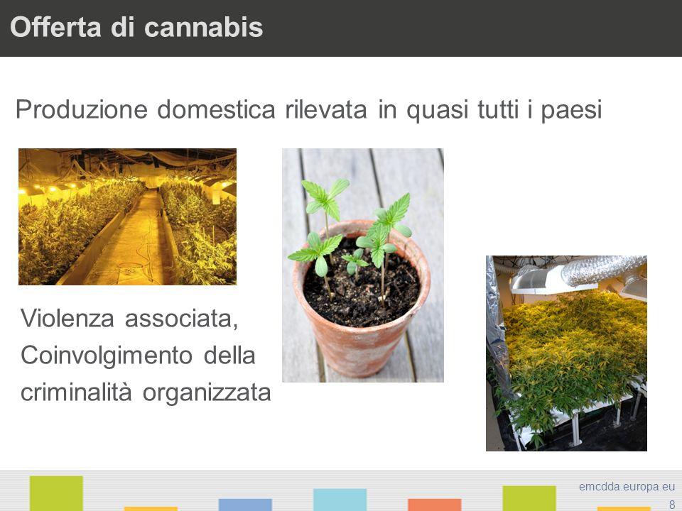 8 emcdda.europa.eu Offerta di cannabis Produzione domestica rilevata in quasi tutti i paesi Violenza associata, Coinvolgimento della criminalità organ