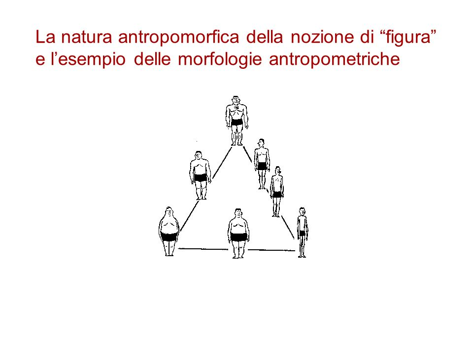 La natura antropomorfica della nozione di figura e lesempio delle morfologie antropometriche