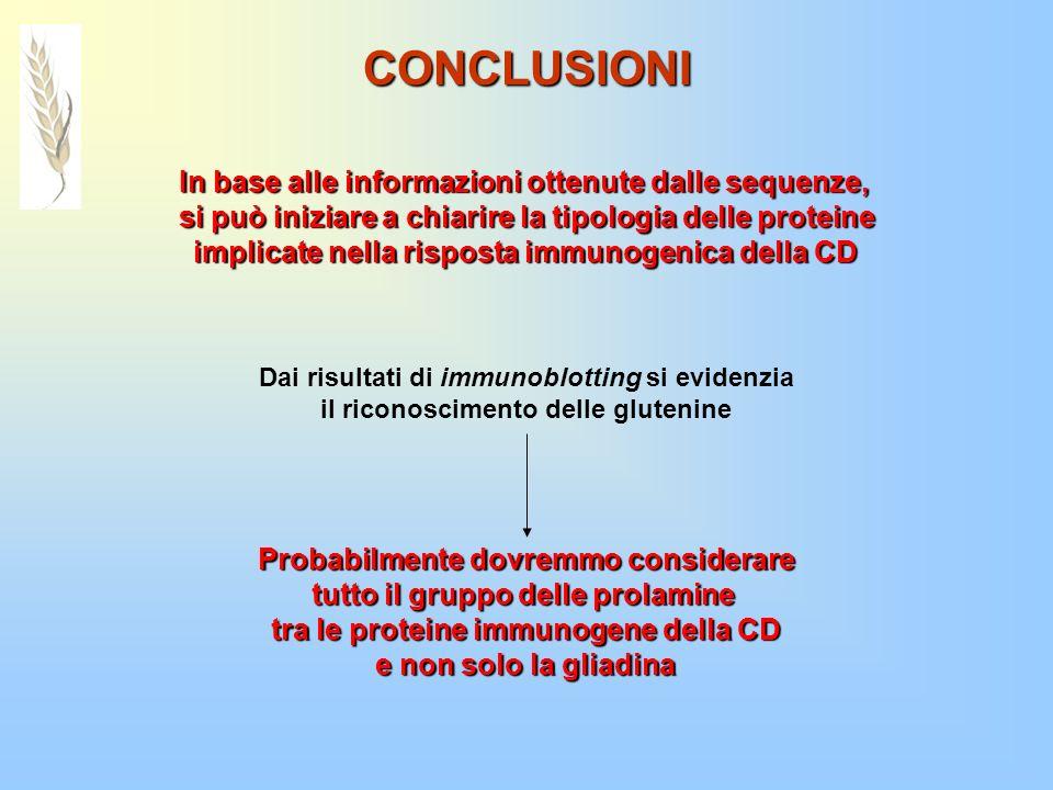 CONCLUSIONI In base alle informazioni ottenute dalle sequenze, si può iniziare a chiarire la tipologia delle proteine implicate nella risposta immunog