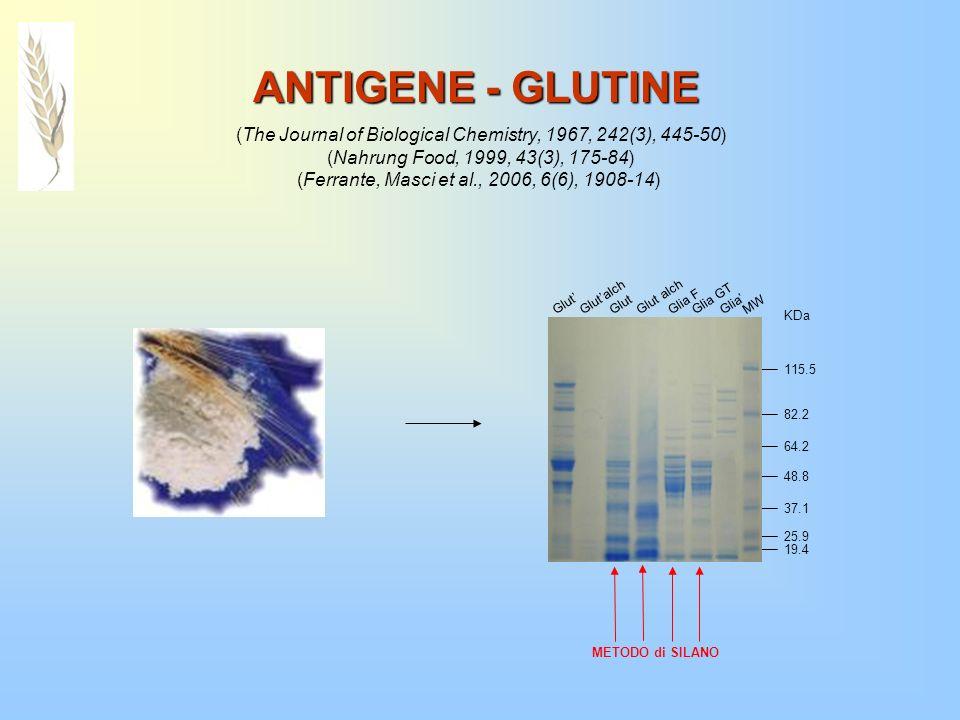 Anticorpo - scFv 1 Glut Glut alch Glia F Glia GT MW 64.2 48.8 37.1 82.2 115.5 KDa Le condizioni denaturanti dellSDS-PAGE modificano lepitopo riconosciuto modificano lepitopo riconosciuto dal frammento anticorpale .