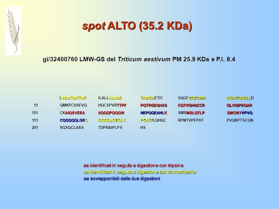 spot ALTO (35.2 KDa) WLATMKTMF LWLATMKTMF ALAAS ILALLALAAS TAIAQL TAIAQLETIC GQCQHH SQGFGQCQHH QQLGQQQLL QQLGQQQLLD 51QMKPCVAFVQ TTPF HQCSPVRTTPFPQTRG