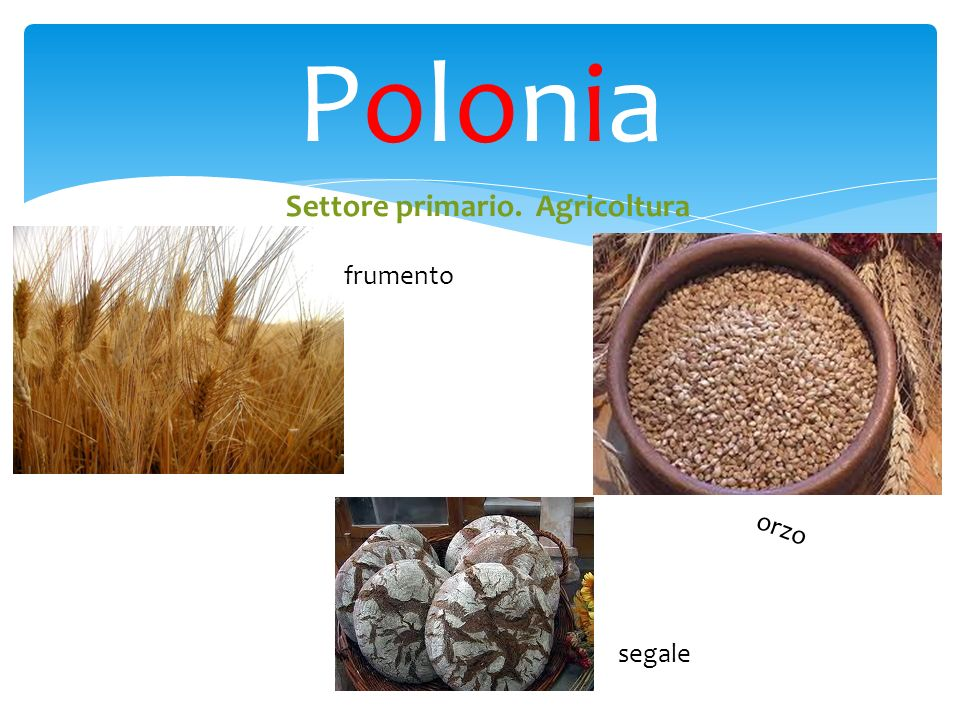 PoloniaPolonia Settore primario. Agricoltura frumento orzo segale