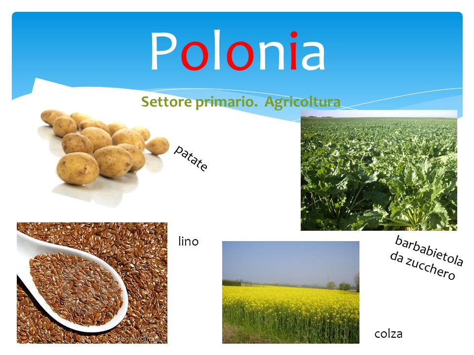 PoloniaPolonia Settore primario. Agricoltura patate colza lino barbabietola da zucchero