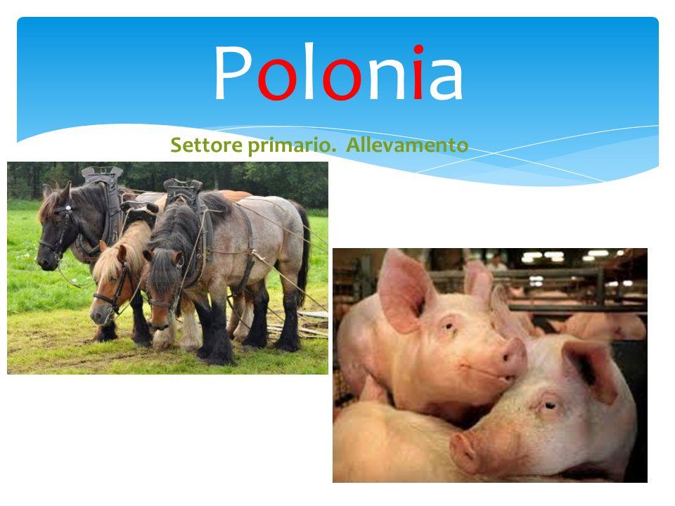 PoloniaPolonia Settore primario. Allevamento