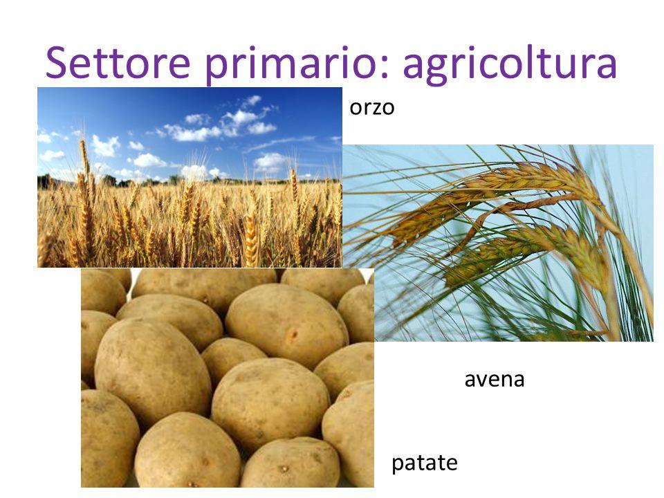 Settore primario: agricoltura patate orzo avena
