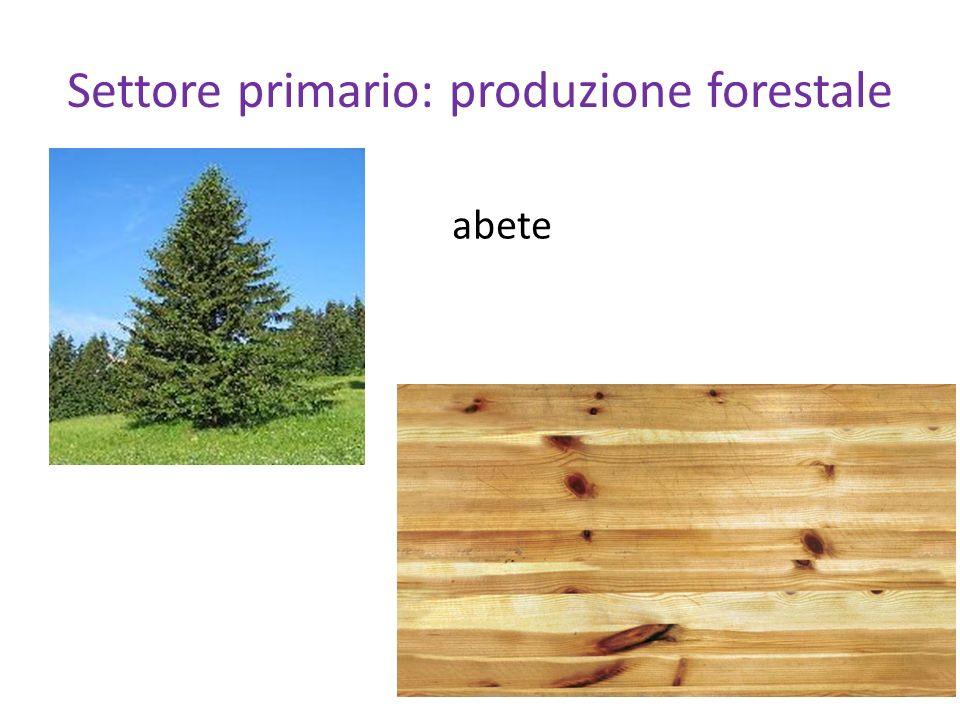 Settore primario: produzione forestale abete