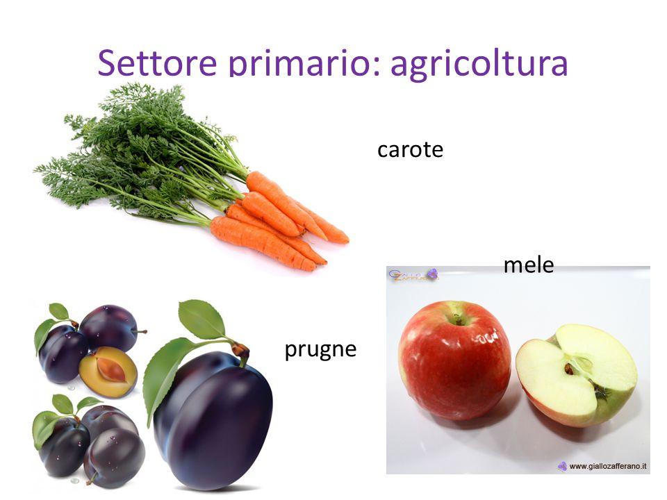 Settore primario: agricoltura carote mele prugne