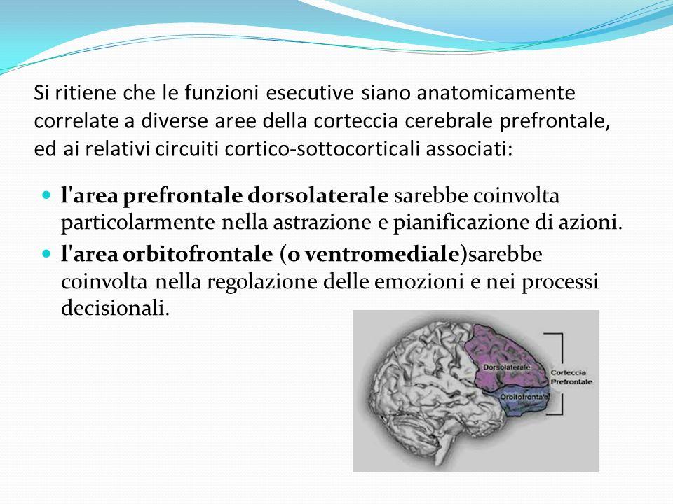 Si ritiene che le funzioni esecutive siano anatomicamente correlate a diverse aree della corteccia cerebrale prefrontale, ed ai relativi circuiti cortico-sottocorticali associati: l area prefrontale dorsolaterale sarebbe coinvolta particolarmente nella astrazione e pianificazione di azioni.