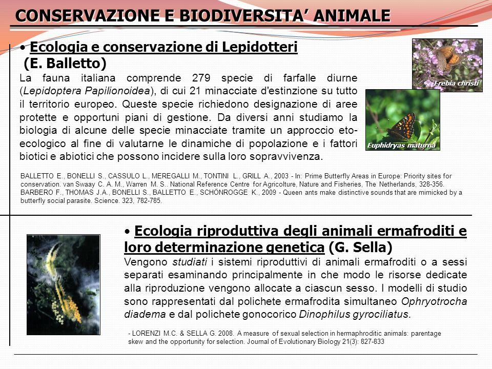 CONSERVAZIONE E BIODIVERSITA ANIMALE Ecologia riproduttiva degli animali ermafroditi e loro determinazione genetica (G. Sella) Ecologia riproduttiva d
