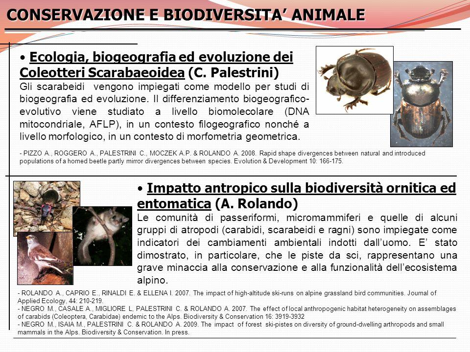 Ecologia, biogeografia ed evoluzione dei Coleotteri Scarabaeoidea (C. Palestrini) Ecologia, biogeografia ed evoluzione dei Coleotteri Scarabaeoidea (C