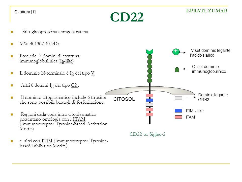 CD22 Silo-glicoproteina a singola catena MW di 130-140 kDa Ig-like Possiede 7 domini di struttura immunoglobulinica (Ig-like) V Il dominio N-terminale