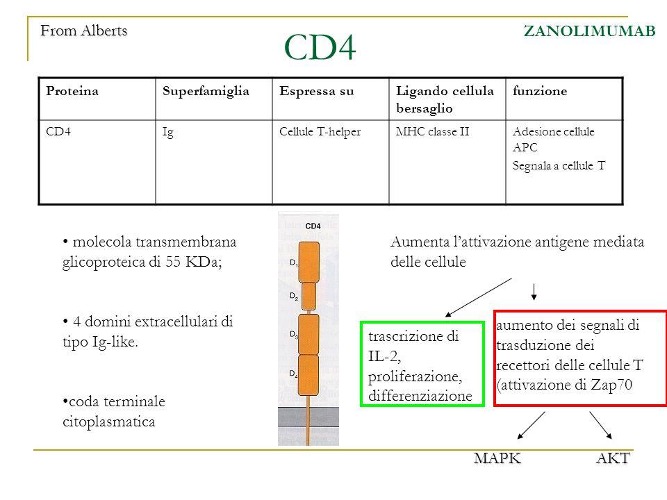 CD4 ZANOLIMUMAB ProteinaSuperfamigliaEspressa suLigando cellula bersaglio funzione CD4IgCellule T-helperMHC classe IIAdesione cellule APC Segnala a ce