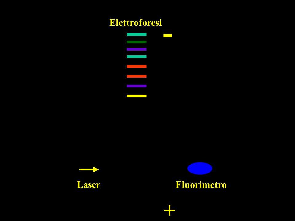 Laser Elettroforesi Fluorimetro - +