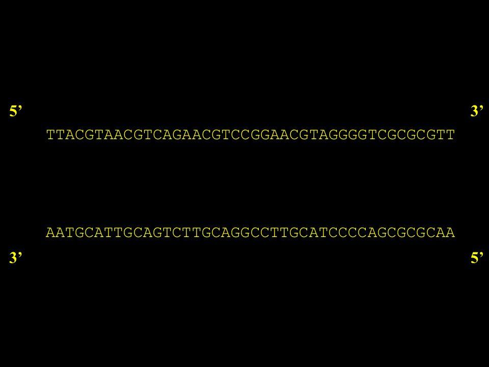 Strategie di marcatura PCR 53 35 53 35 5 5 Vantaggi: elevata attività specifica, necessarie poche molecole di stampo