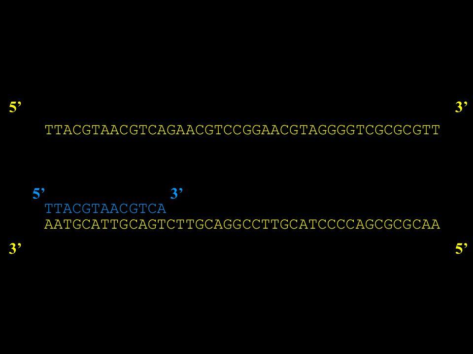 Strategie di marcatura Sintesi di cDNA mediante transcrittasi inversa