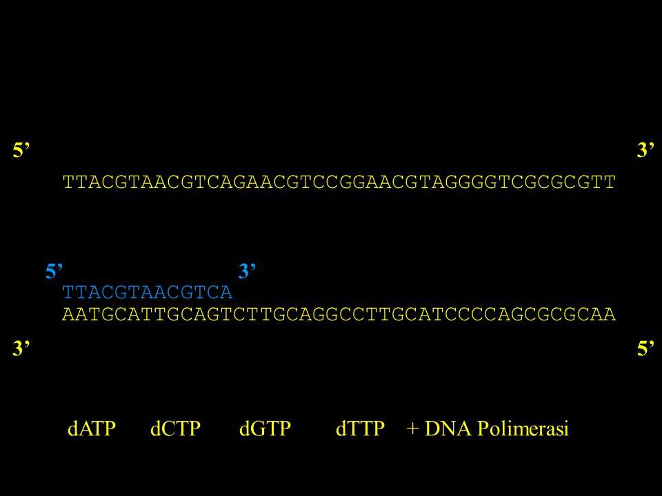 TTACGTAACGTCAGAACGTCCGGAACGTAGGGGTCGCGCGTT 53 AATGCATTGCAGTCTTGCAGGCCTTGCATCCCCAGCGCGCAA 35 TTACGTAACGTCA 53 dATP dCTP dGTP dTTP + DNA Polimerasi