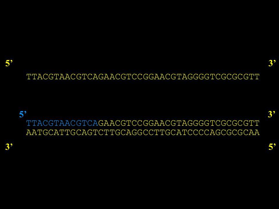 53 AATGCATTGCAGTCTTGCAGGCCTTGCATCCCCAGCGCGCAA 35 TTACGTAACGTCA 53 dA dC dG dT + DNA Polimerasi ddATP ddCTP ddGTP ddTTP dATP dCTP dGTP dTTP + DNA Polimerasi