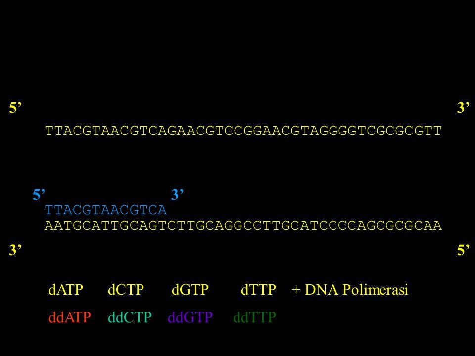 Traccianti utilizzati Nucleotidi marcati con sostanze non radioattive - Fluorocromi (marcatura diretta) - Enzimi (perossidasi, fosfatasi alcalina) - Digossigenina (riconosciuta da anticorpi specifici marcati con fluorocromi o enzimi) - Biotina (riconosciuta da avidina marcata con fluorocromi o enzimi)