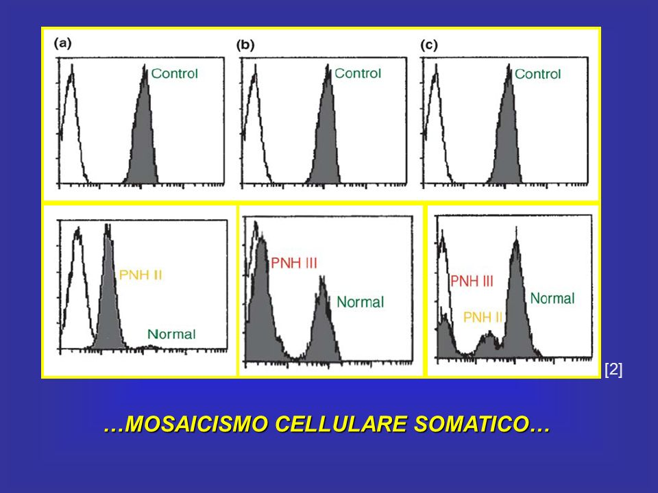 …MOSAICISMO CELLULARE SOMATICO… [2]