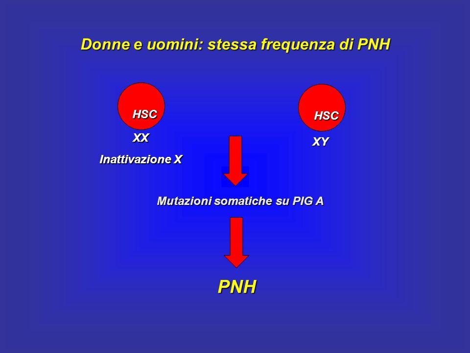 Donne e uomini: stessa frequenza di PNH HSC XX Inattivazione X HSC XY Mutazioni somatiche su PIG A PNH