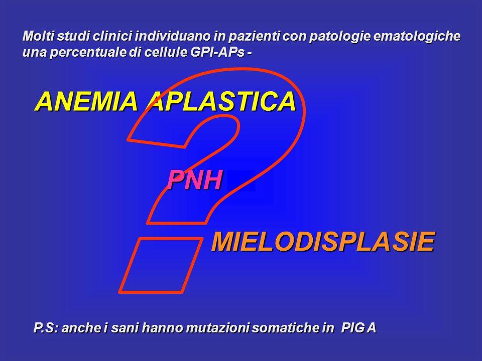 Molti studi clinici individuano in pazienti con patologie ematologiche una percentuale di cellule GPI-APs - ANEMIA APLASTICA MIELODISPLASIE PNH P.S: a
