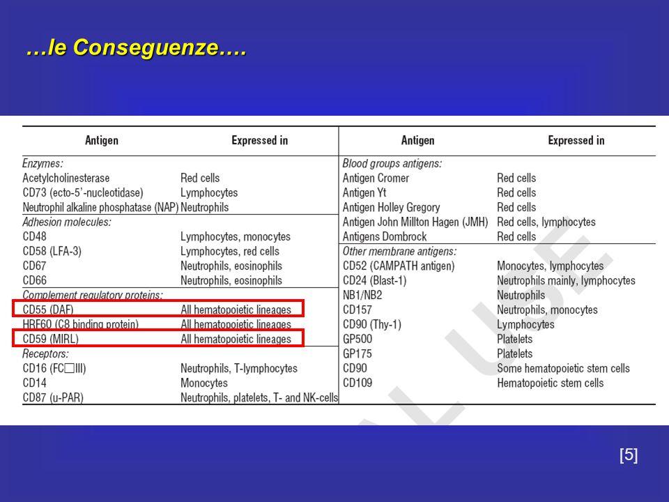 … Le Mutazioni … 1995 Bessler et al analizzano il cDNA di PIG A in quattro linee cellulari GPI-AP- La perdita del trascritto funzionante è dovuta a exon skipping dellesone 2 INSERZIONI E DELEZIONI: Mutazioni missense (cambio aa)Mutazioni missense (cambio aa) Mutazioni nonsense (stop codon prematuro)Mutazioni nonsense (stop codon prematuro) Mutazioni su siti di splicing (lunghezza mRNA e stabilità)Mutazioni su siti di splicing (lunghezza mRNA e stabilità) DELEZIONE regione promoter (CAAT motifs), esone 1 e parte dellintrone 1 determina una diminuita ma non assente espressione delle GPI-APs [10]