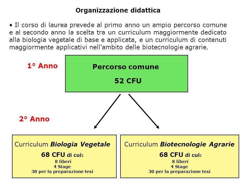 1° Anno - I semestre Percorso comune SEC-S/024Statistica e bioinformatica BIO/016 Biologia cellulare e molecolare vegetale AGR/04 AGR/07 8 (4+4) Tecniche di manipolazione di tessuti vegetali Modulo: Colture in vitro Modulo: Trasformazione genetica BIO/01 BIO/02 6 (3+3)Biodiversità vegetale SSDCFUInsegnamento