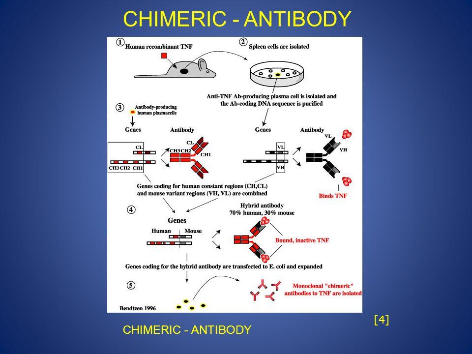 CHIMERIC - ANTIBODY [4] CHIMERIC - ANTIBODY