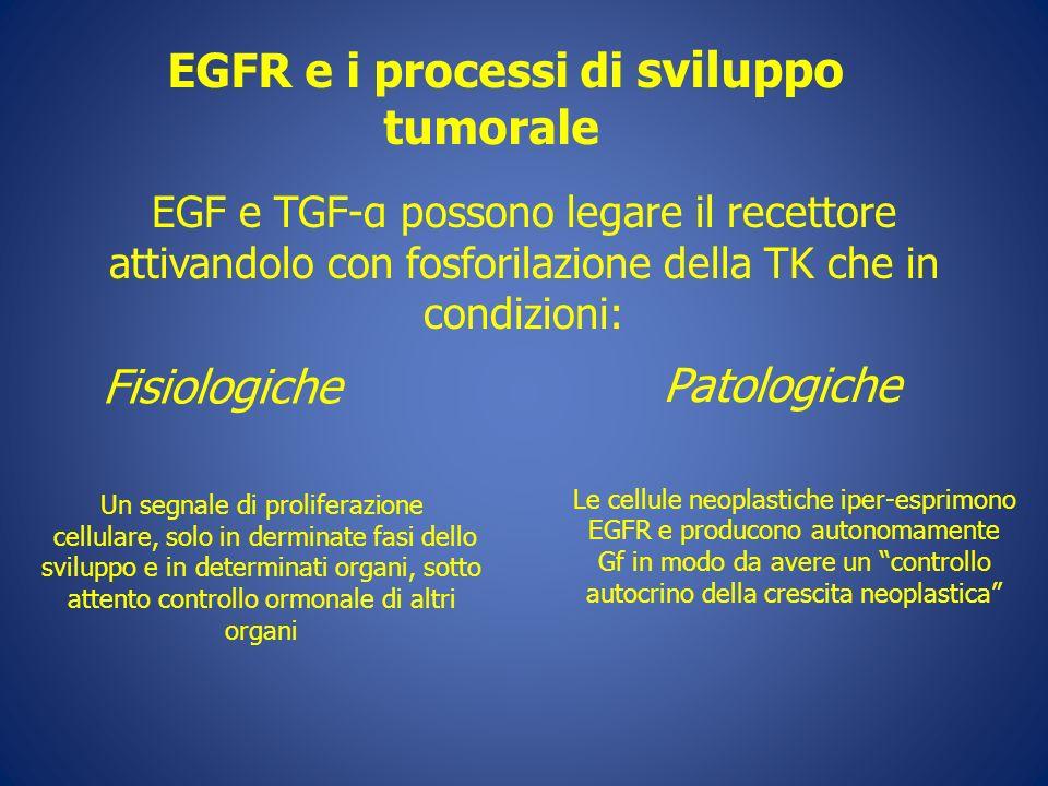 EGFR e i processi di sviluppo tumorale Le cellule neoplastiche iper-esprimono EGFR e producono autonomamente Gf in modo da avere un controllo autocrin