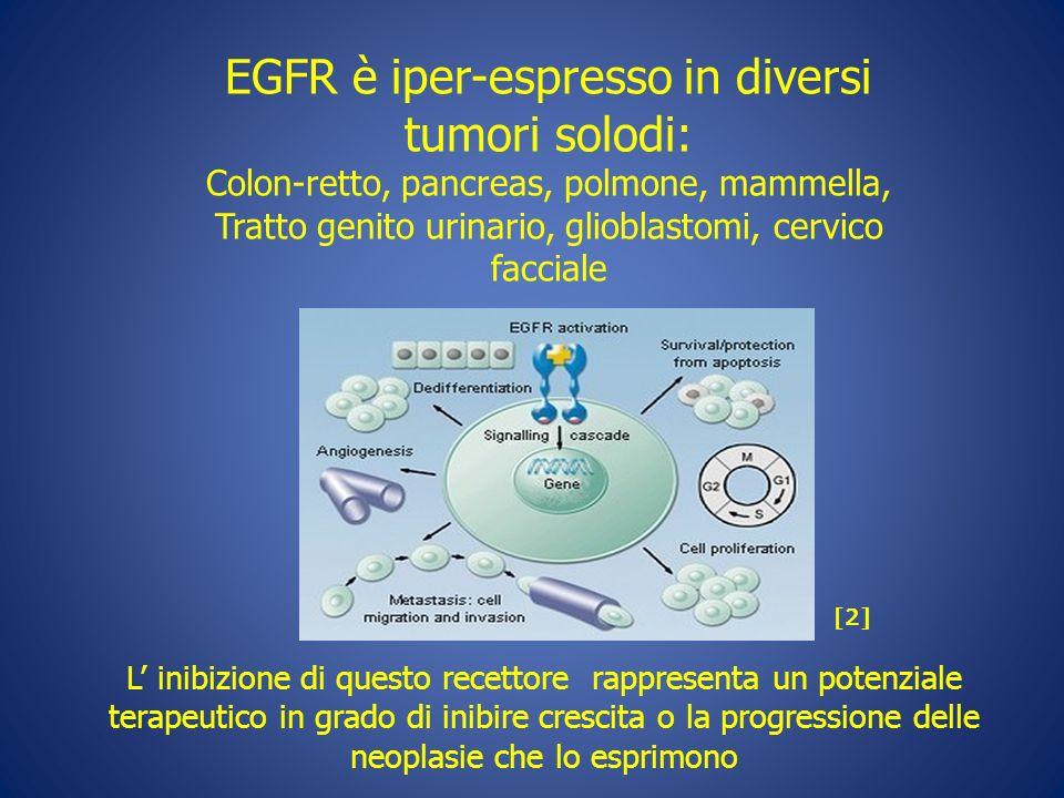 EGFR è iper-espresso in diversi tumori solodi: Colon-retto, pancreas, polmone, mammella, Tratto genito urinario, glioblastomi, cervico facciale L inib