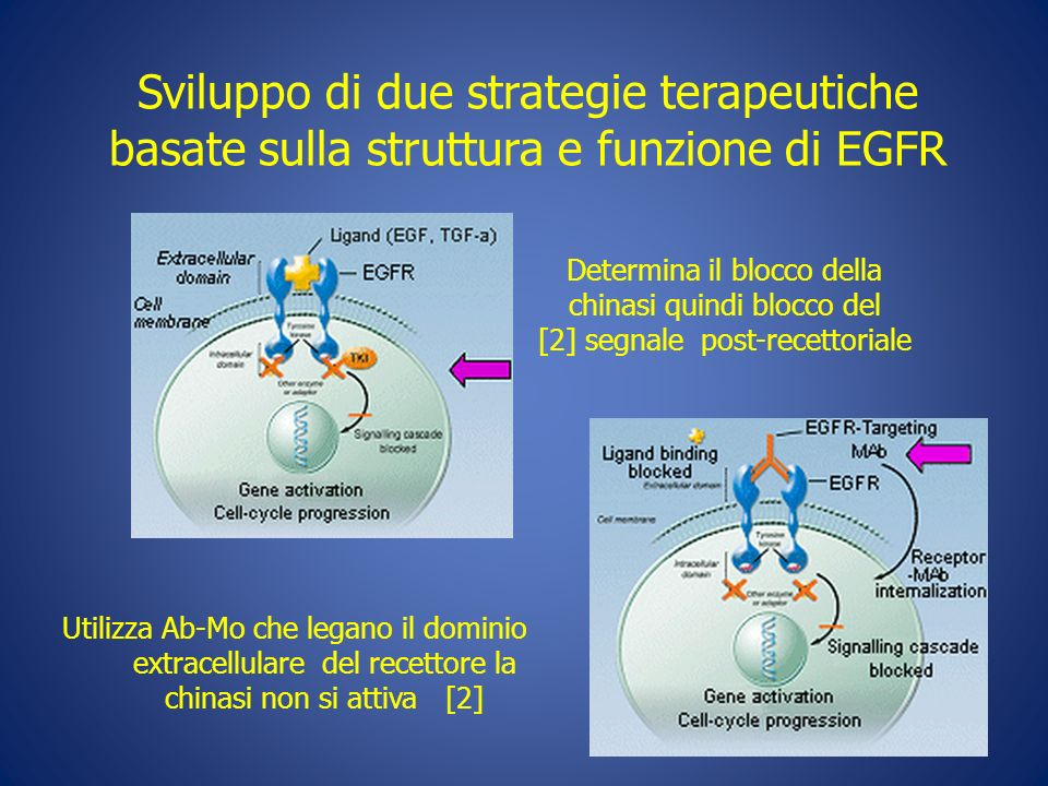 Utilizza Ab-Mo che legano il dominio extracellulare del recettore la chinasi non si attiva [2] Determina il blocco della chinasi quindi blocco del [2]