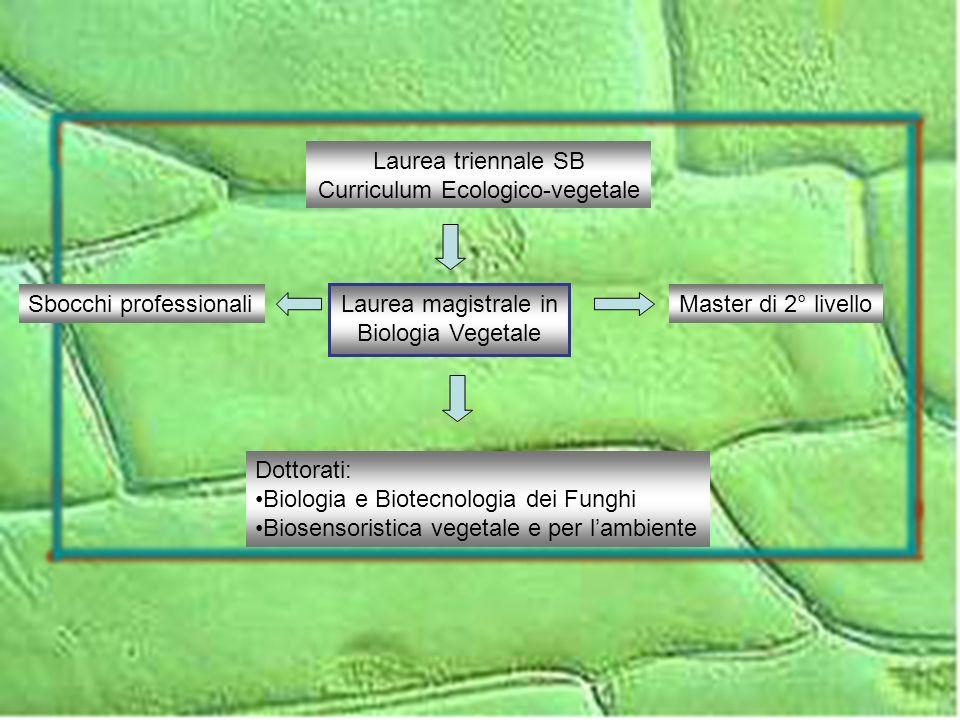 Attività formative di base Biomatematica Fisica Biologica Chimica Analitica Strumentale