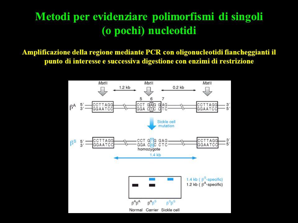 Metodi per evidenziare polimorfismi di singoli (o pochi) nucleotidi Amplificazione della regione mediante PCR con oligonucleotidi fiancheggianti il pu