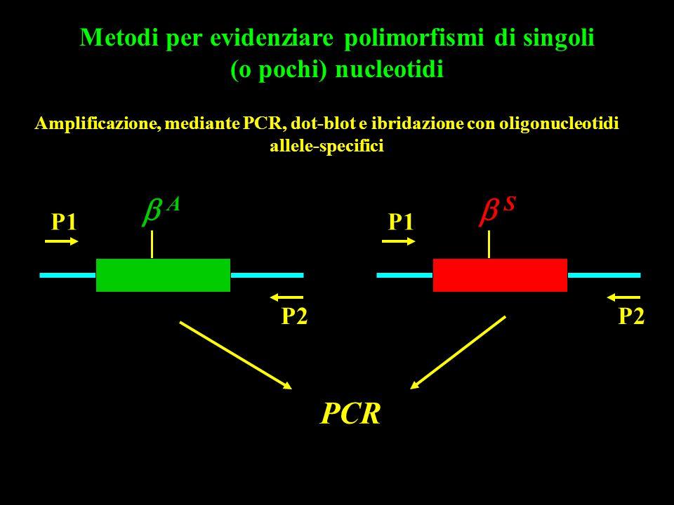Amplificazione, mediante PCR, dot-blot e ibridazione con oligonucleotidi allele-specifici A P1 P2 S P1 P2 PCR Metodi per evidenziare polimorfismi di s