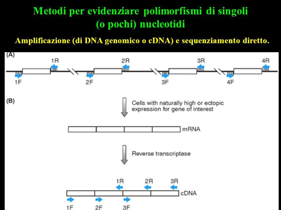 Amplificazione (di DNA genomico o cDNA) e sequenziamento diretto. Metodi per evidenziare polimorfismi di singoli (o pochi) nucleotidi