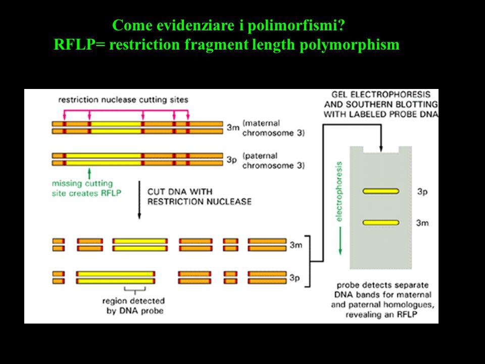 Gli RFLP possono evidenziare sia polimorfismi dovuti a mutazione di singoli nucleotidi (che fanno comparire o scomarire siti di restrizione) sia polimorfismi di tipo minisatellite (VNTR = Variable Number of Tandem Repeats)