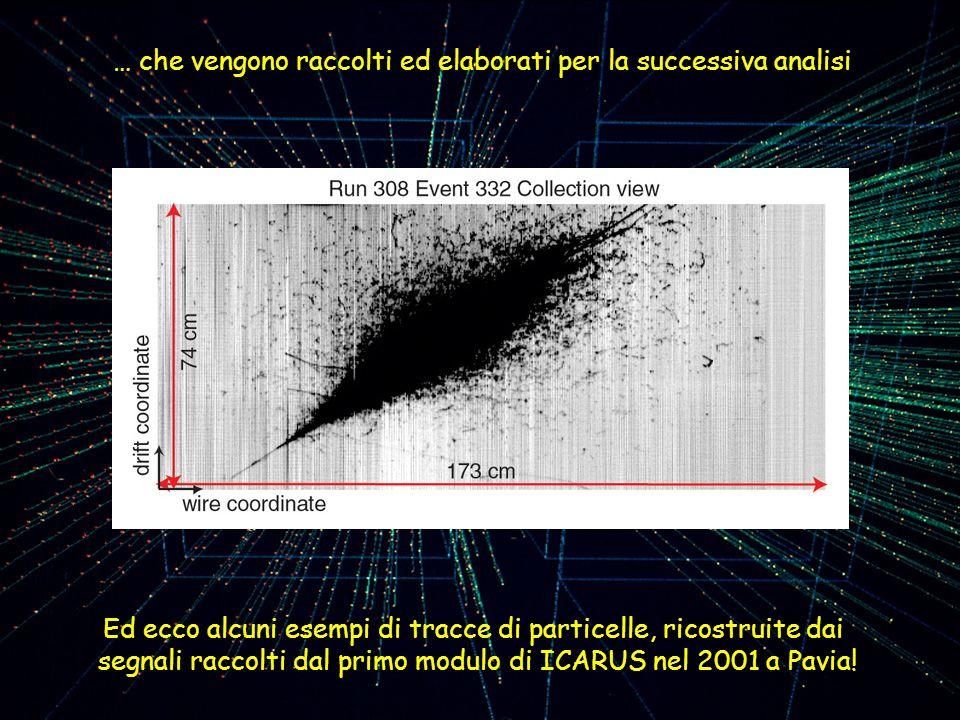 … che vengono raccolti ed elaborati per la successiva analisi Ed ecco alcuni esempi di tracce di particelle, ricostruite dai segnali raccolti dal prim