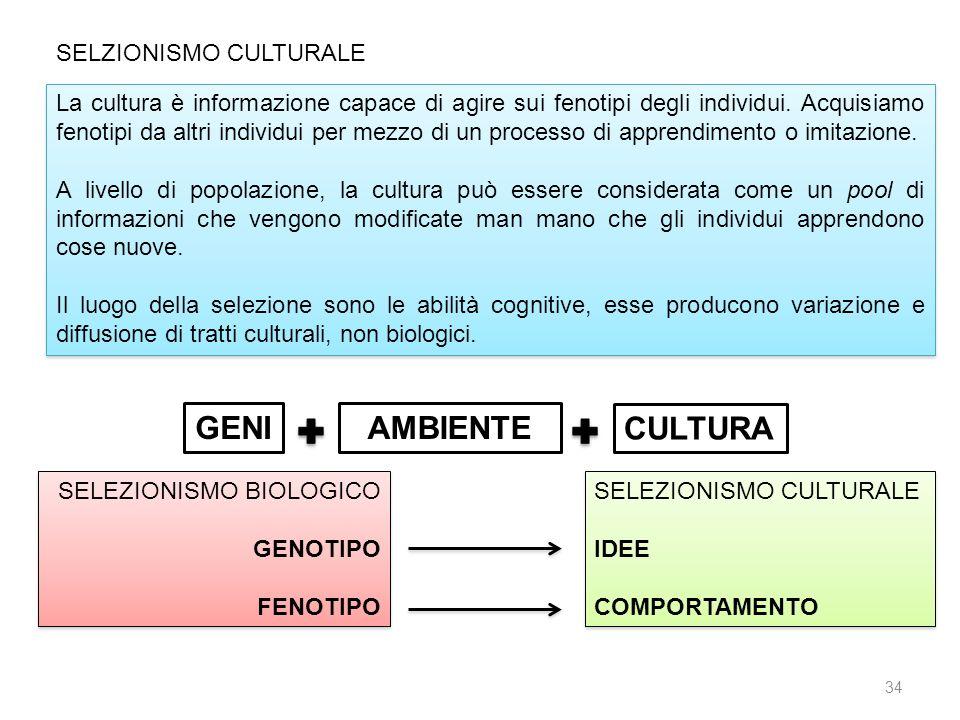 SELZIONISMO CULTURALE La cultura è informazione capace di agire sui fenotipi degli individui. Acquisiamo fenotipi da altri individui per mezzo di un p