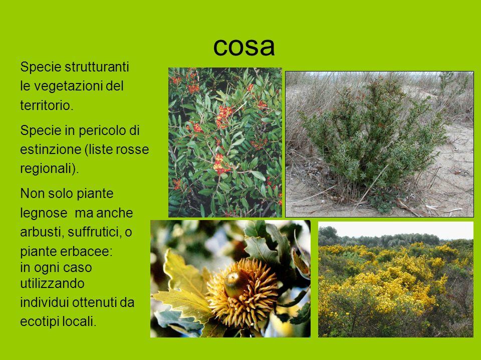 cosa Specie strutturanti le vegetazioni del territorio. Specie in pericolo di estinzione (liste rosse regionali). Non solo piante legnose ma anche arb