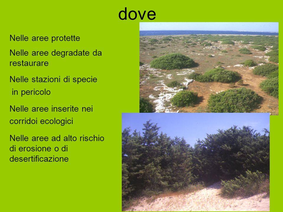 dove Nelle aree protette Nelle aree degradate da restaurare Nelle stazioni di specie in pericolo Nelle aree inserite nei corridoi ecologici Nelle aree