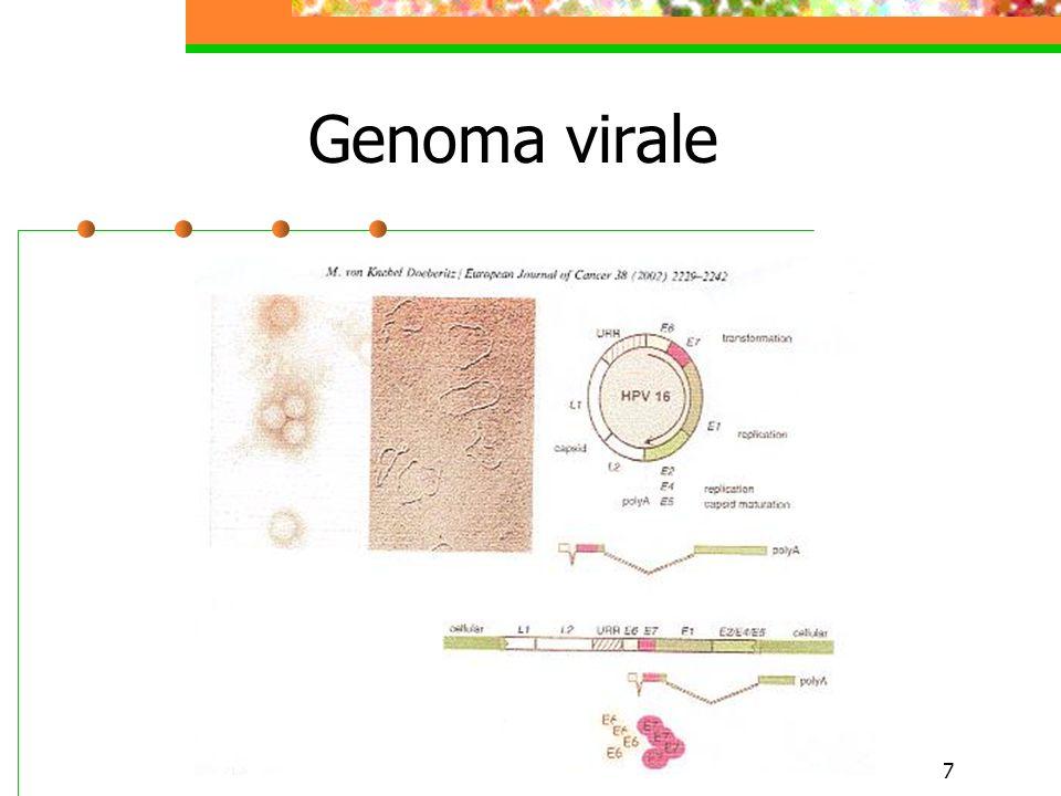 7 Genoma virale