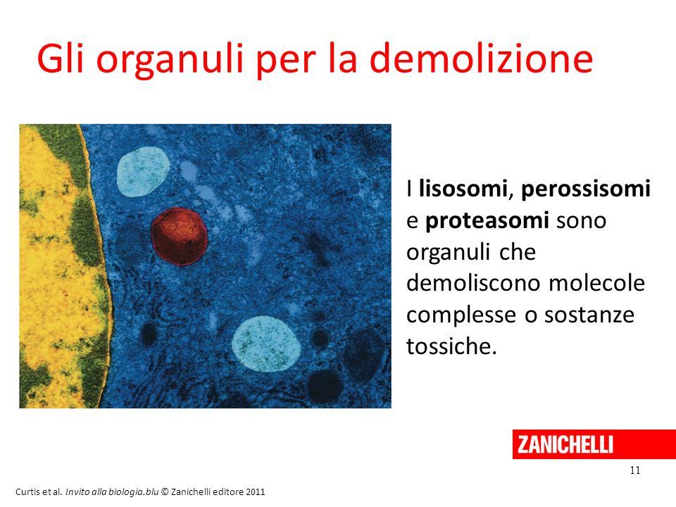 11 Curtis et al. Invito alla biologia.blu © Zanichelli editore 2011 Gli organuli per la demolizione I lisosomi, perossisomi e proteasomi sono organuli