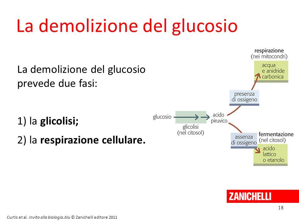 18 Curtis et al. Invito alla biologia.blu © Zanichelli editore 2011 La demolizione del glucosio La demolizione del glucosio prevede due fasi: 1) la gl