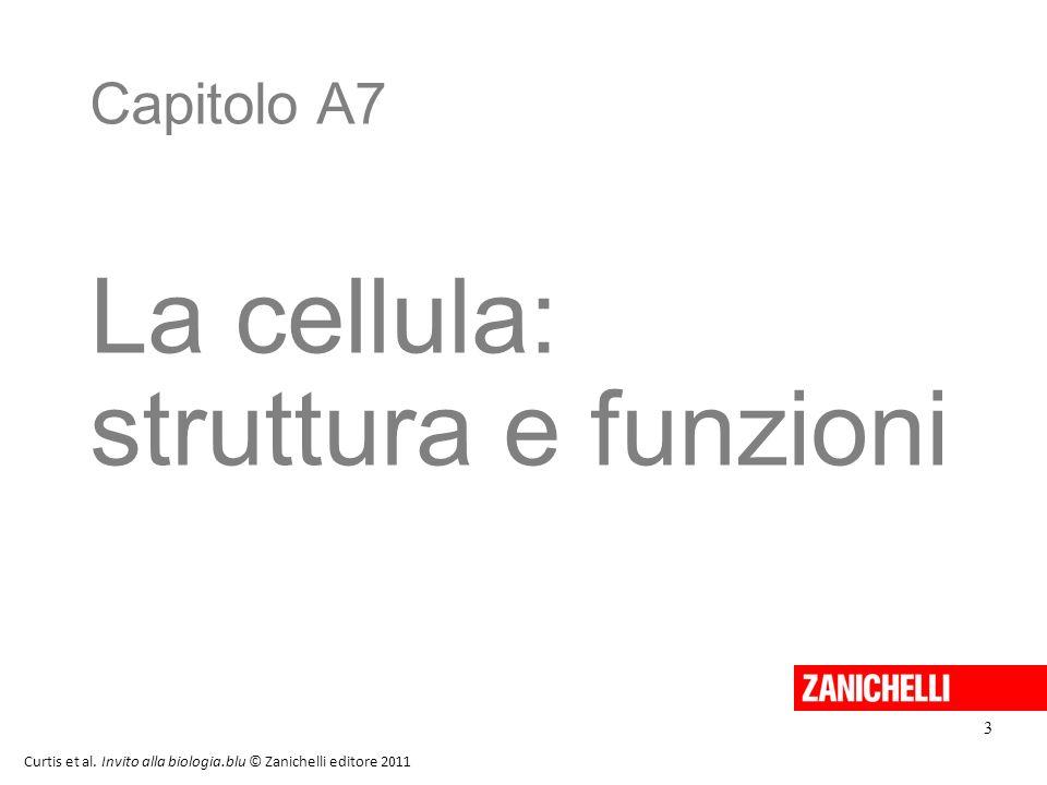 Capitolo A7 La cellula: struttura e funzioni Curtis et al. Invito alla biologia.blu © Zanichelli editore 2011 3